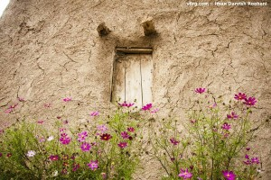 ديلمؤنˇ بهار؛ عکس: ايمان درويش رۊحاني